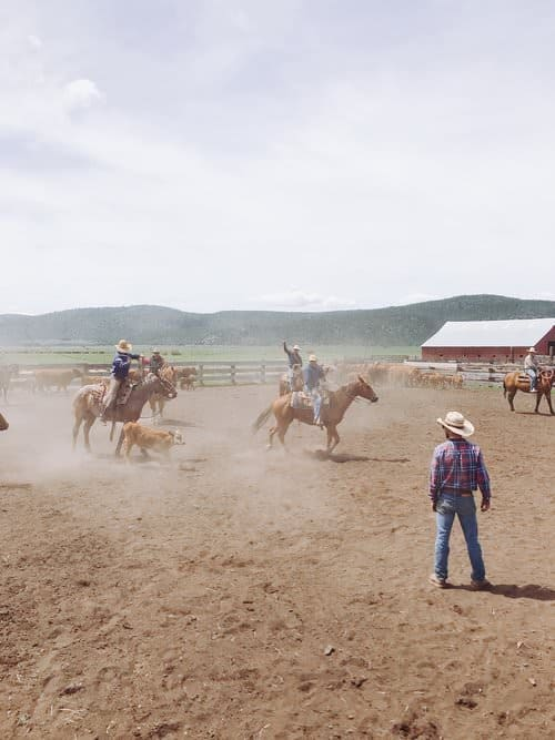 """This Week on the Ranch"" is a weekly series sharing snippets and stories from life on the range. This week we're talking about cattle branding."