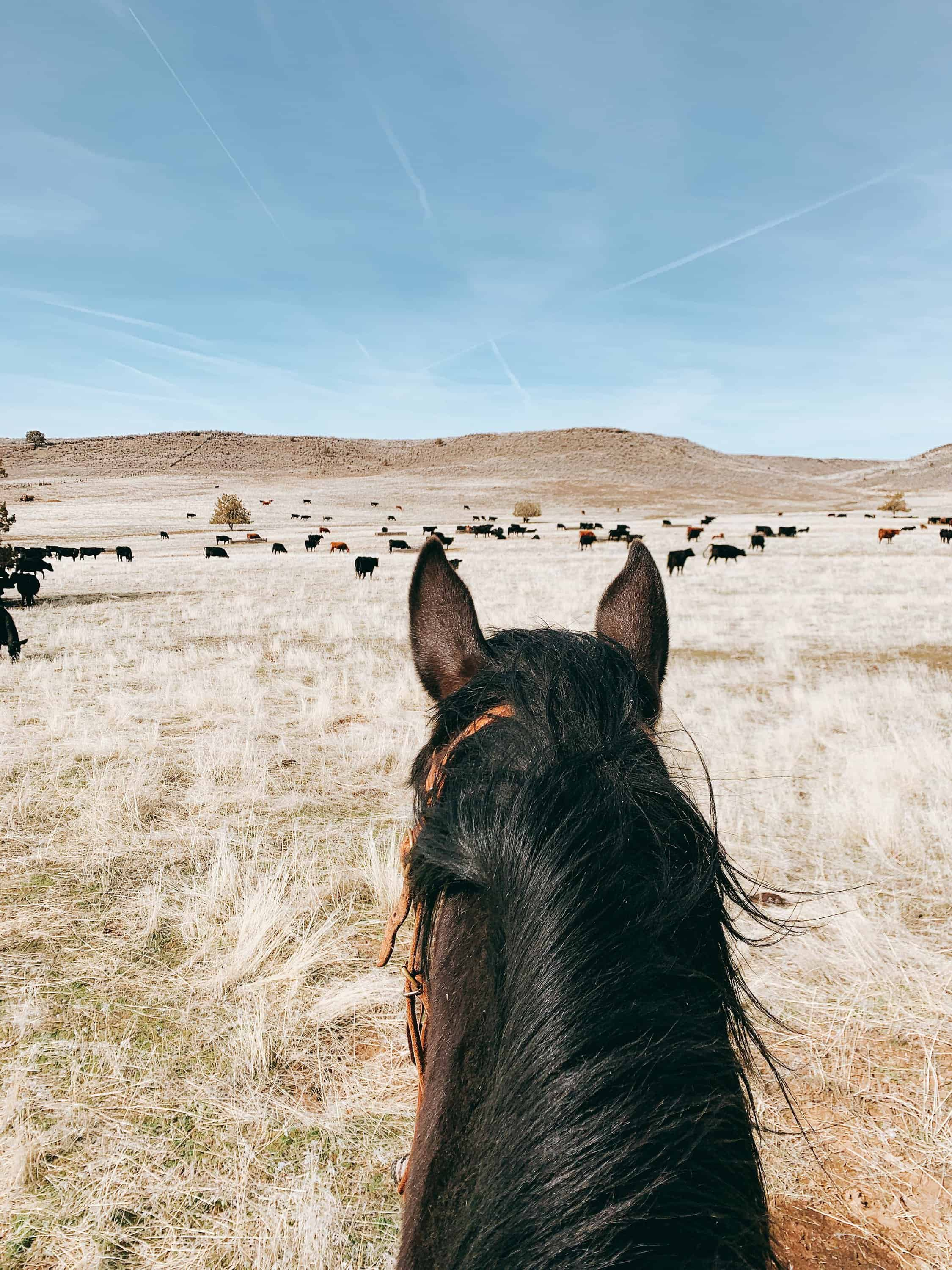 Come along with us for a Day on the Ranch! We'll feed hay, move cows, and experience a few bumps in the road!