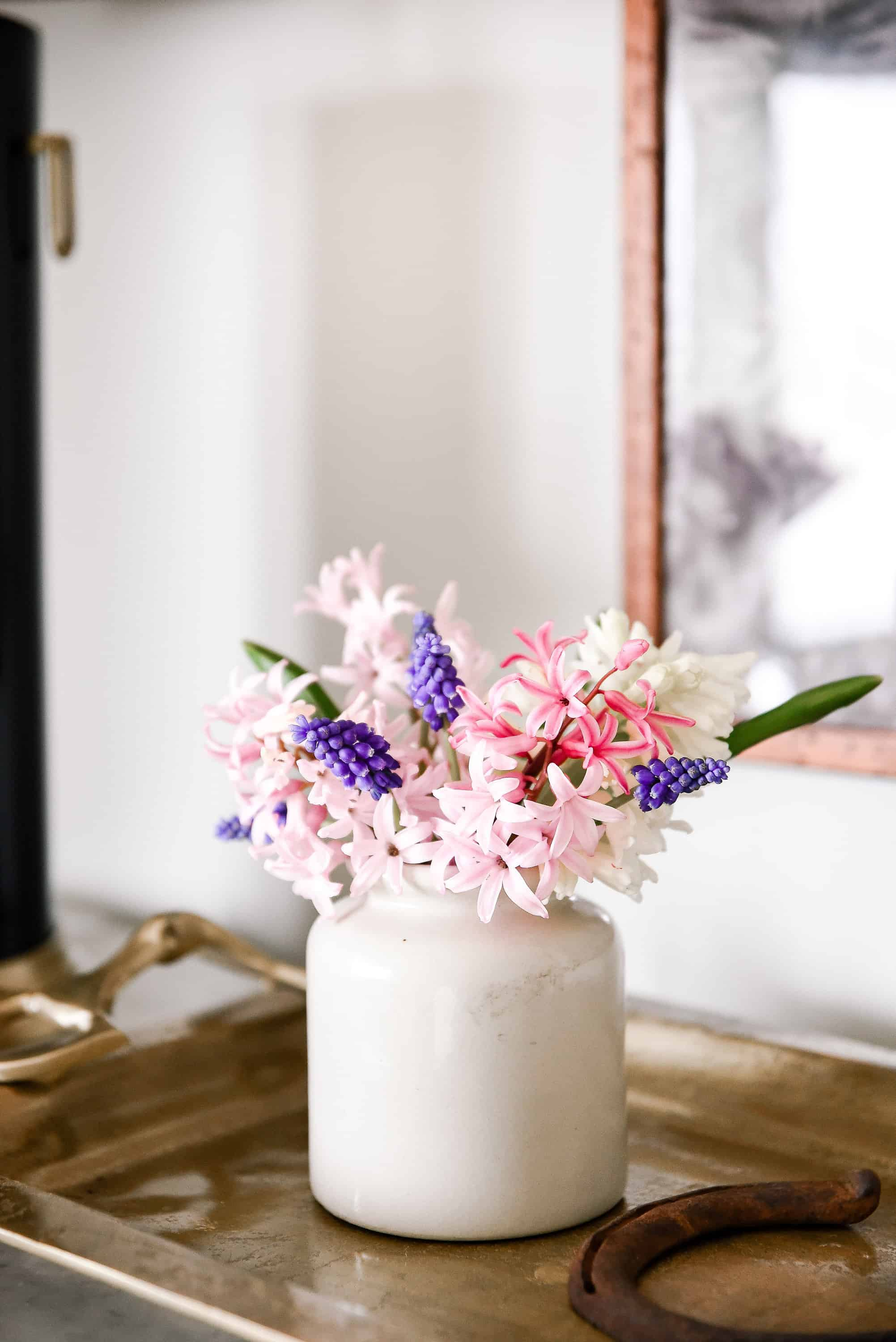 Forcing hyacinth bulbs indoors is easy with just a little preparation! Read below to learn how to force spring bulbs indoors!