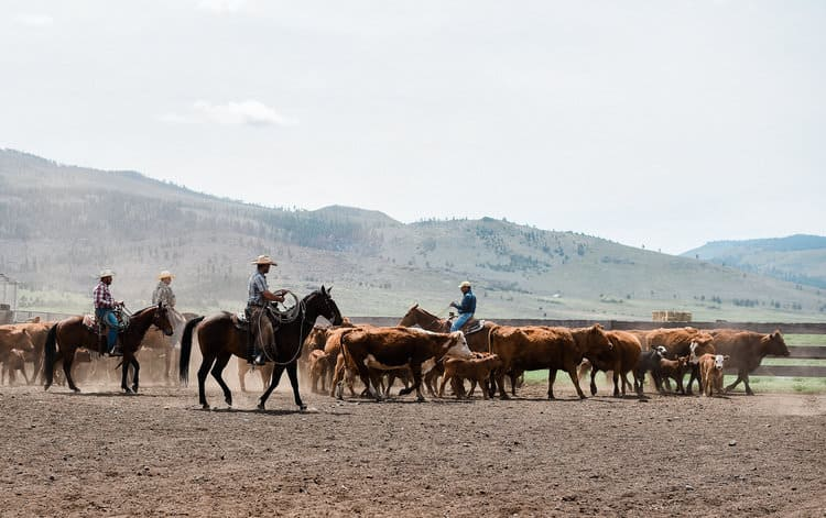"""This Week on the Ranch"" is a weekly series sharing snippets and stories from life on the range."""