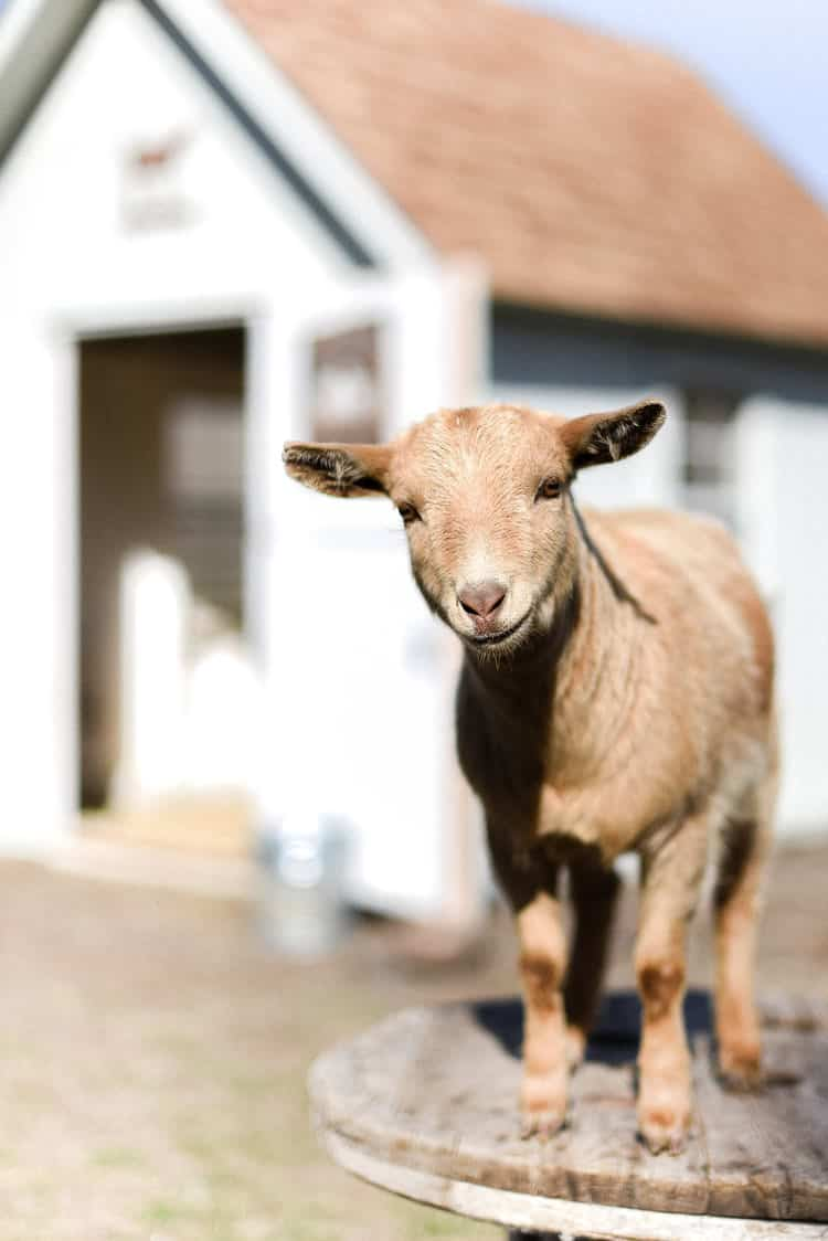 Happy spring! We are looking forward to the warmer weather and a nice deep clean this week! Butternut and her brothers are very, very excited about the new season and the growing green grass!