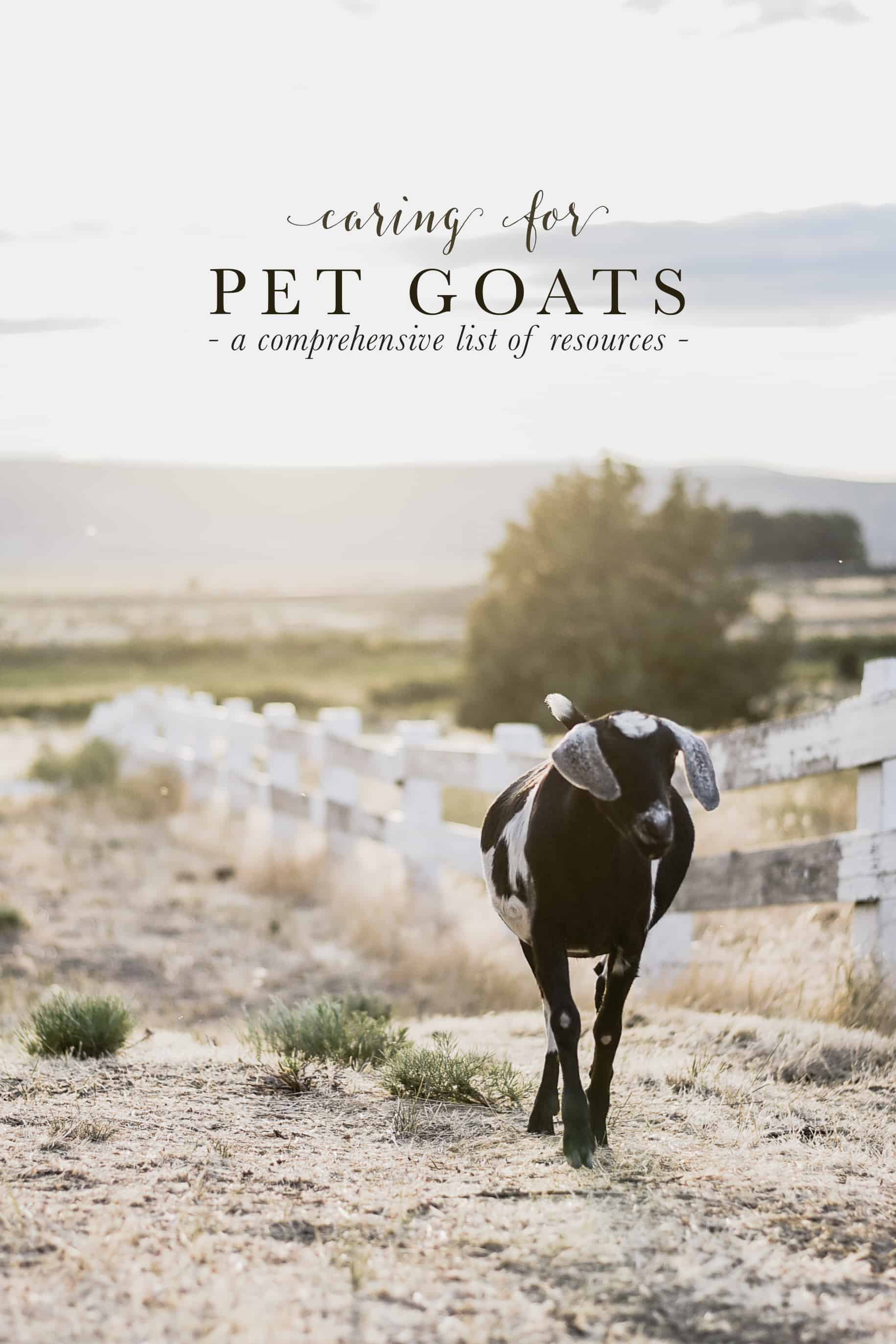 The Best Resources for Goat Care: My two favorite websites for goat health information; full of information for raising goats as pets as well as for income. #goatcare #goatresources #goats