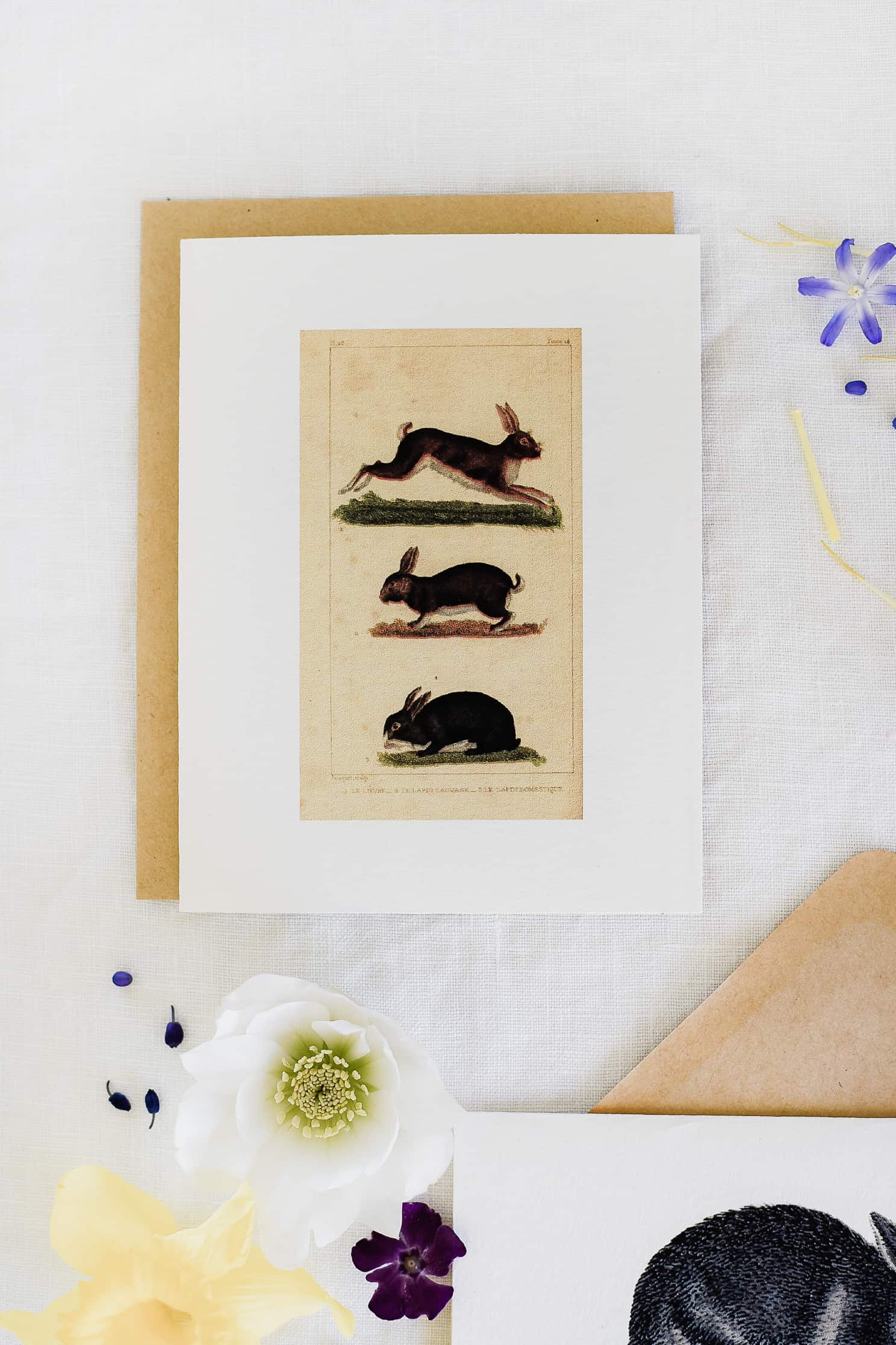 printable easter cards with rabbits