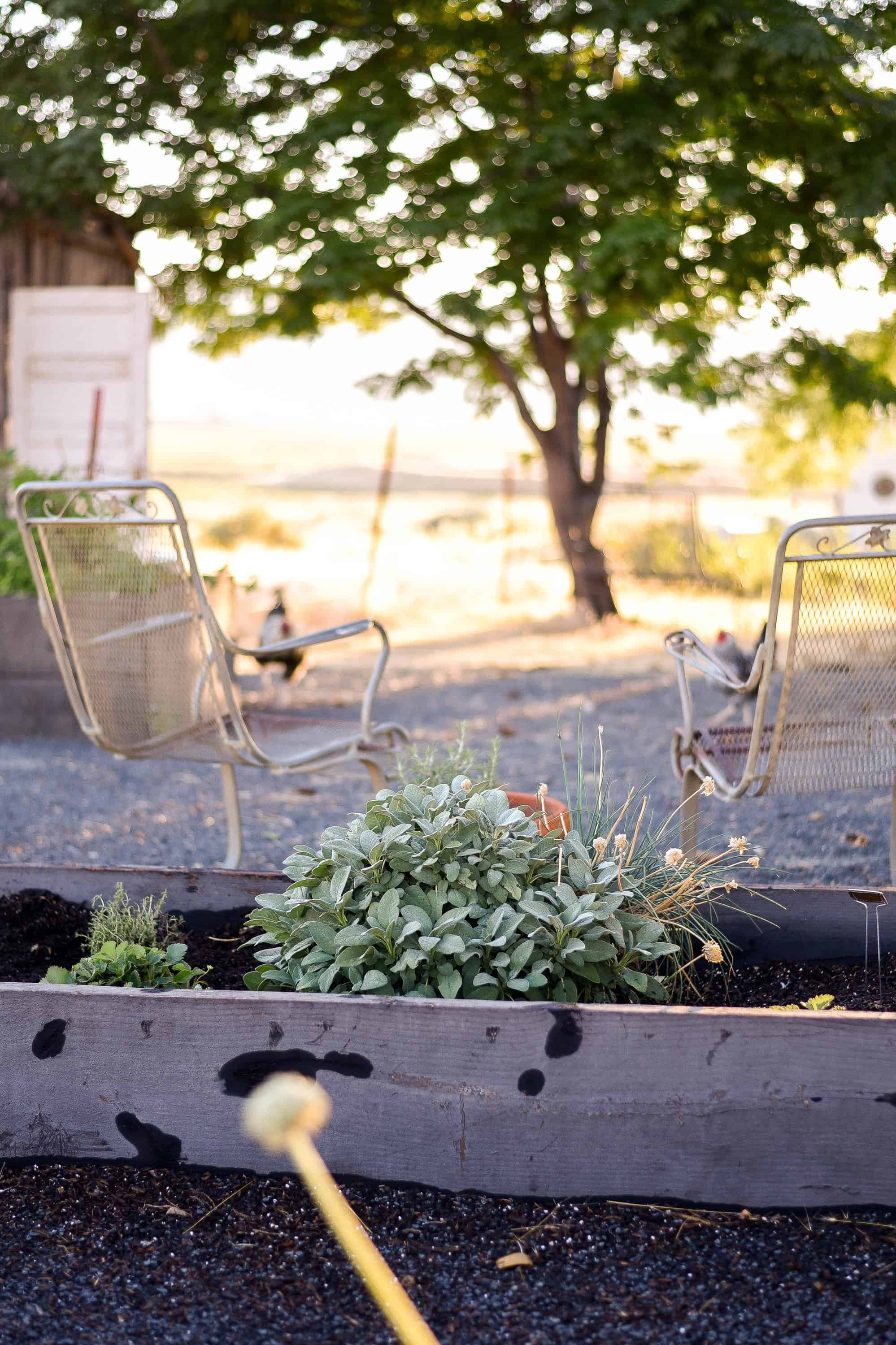 If you've ever wondered how to grow fall or winter vegetables - it's just like summer gardening, with a splash of extra effort!