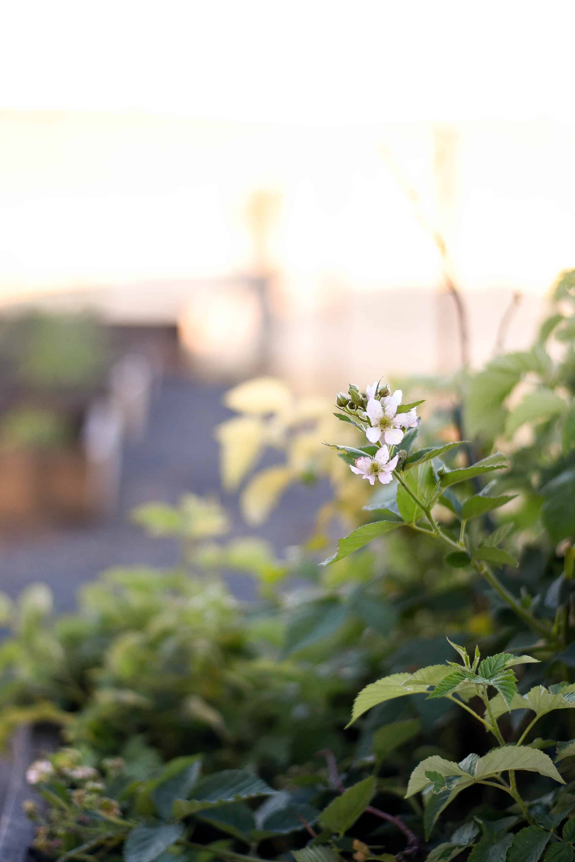 flower bloom in a garden