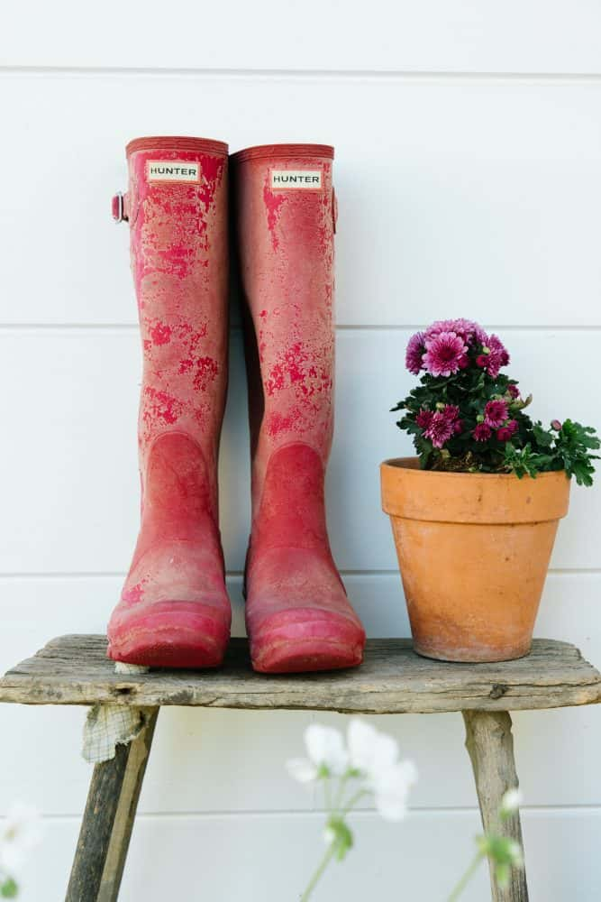 Red hunter boots on vintage wood bench with pink mums in terra-cotta pot