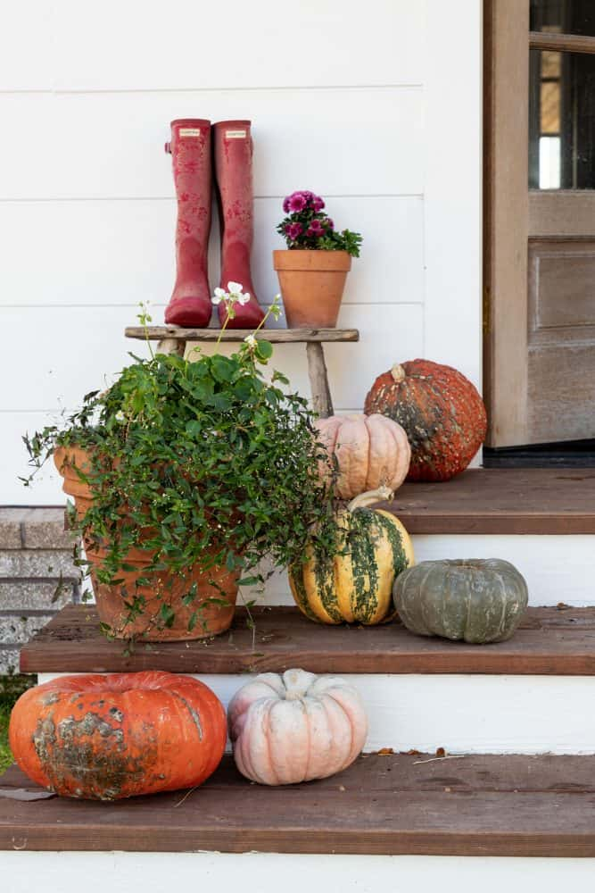 Pumpkins & pink mums on farmhouse porch decorated for fall