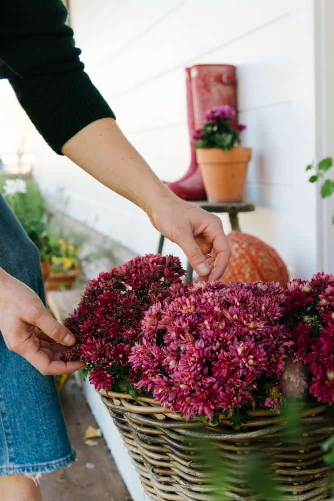 Girl with basket of pink mums on fall porch